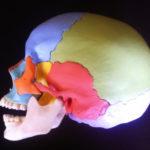 cranio-schaedel2
